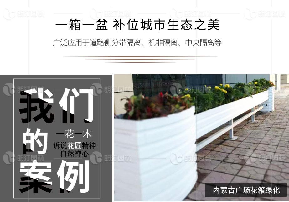 内蒙古广场花箱绿化案例