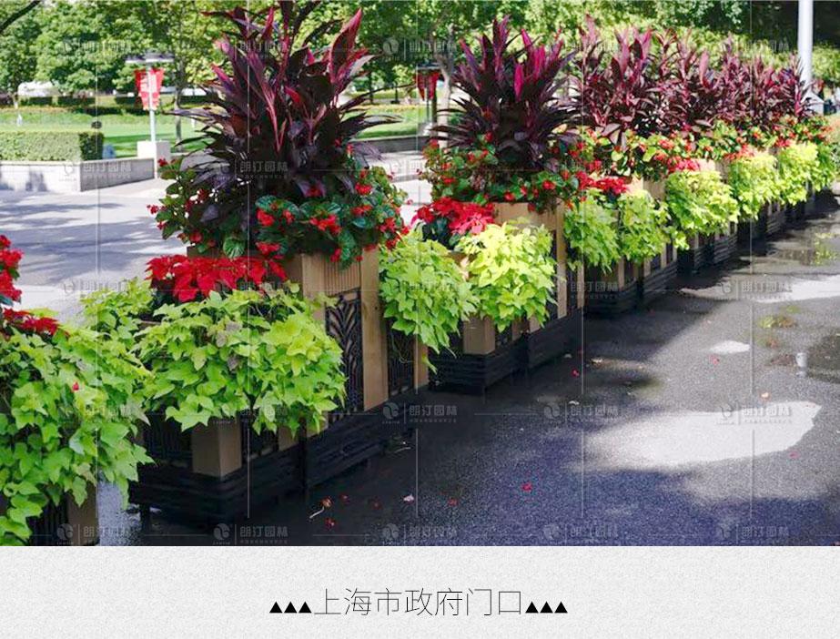 上海市政府門口廣場綠化花箱