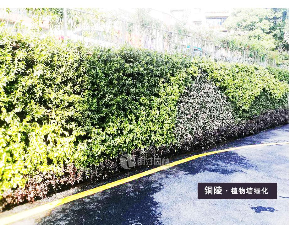 铜陵护栏绿化花盆