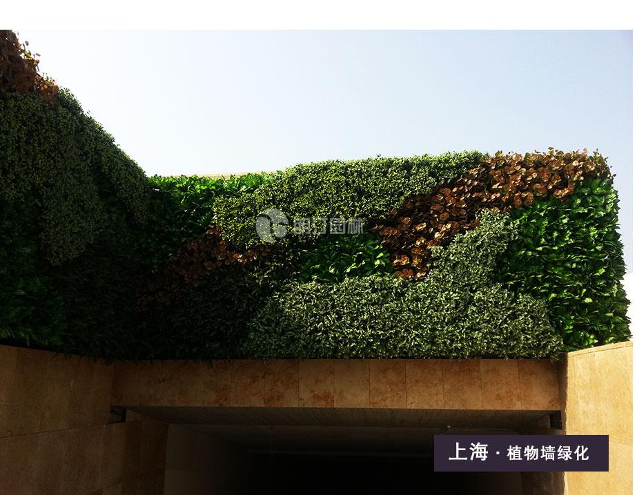 立体绿化专业服务商