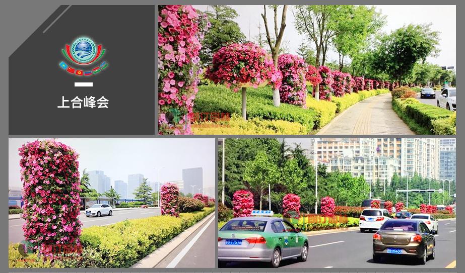 3 青島上合峰會道路綠化案例