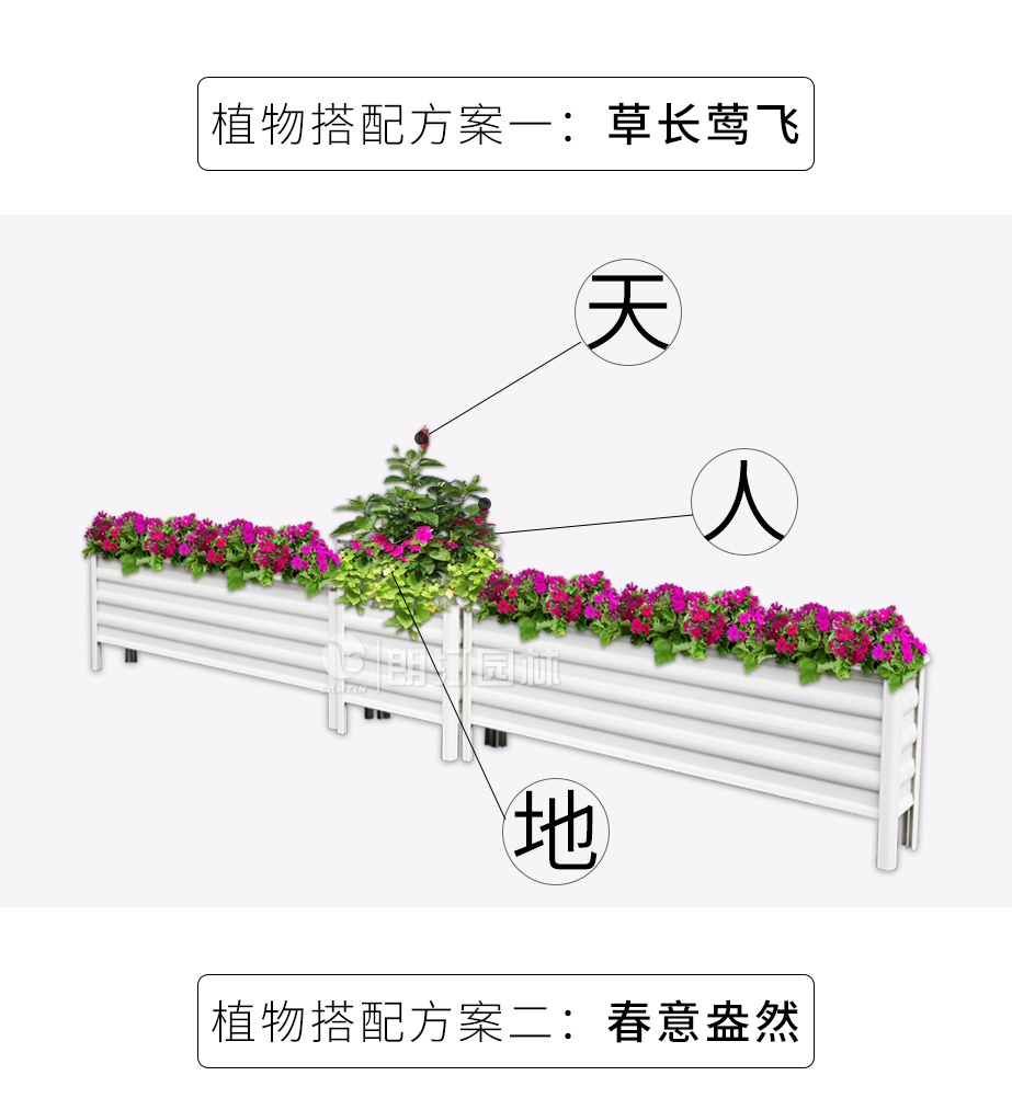 道路隔离花箱植物搭配方案