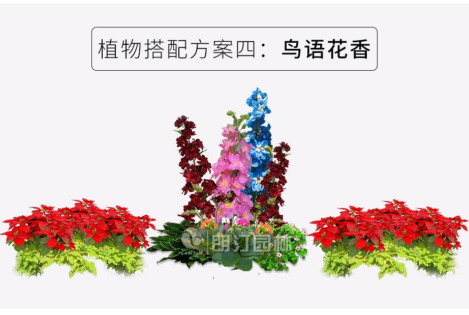 花箱里种什么植物