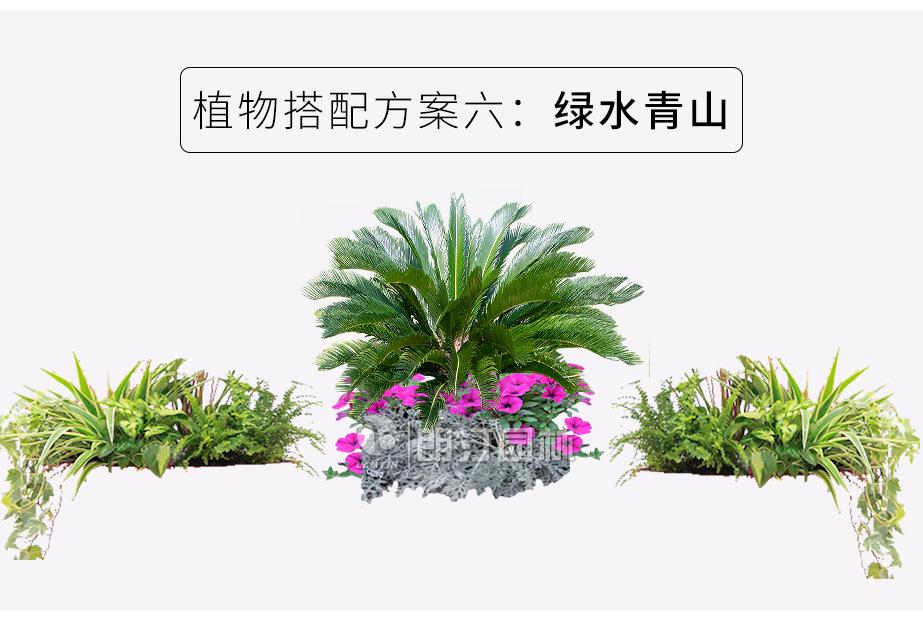 铝合金组合花箱植物搭配方案
