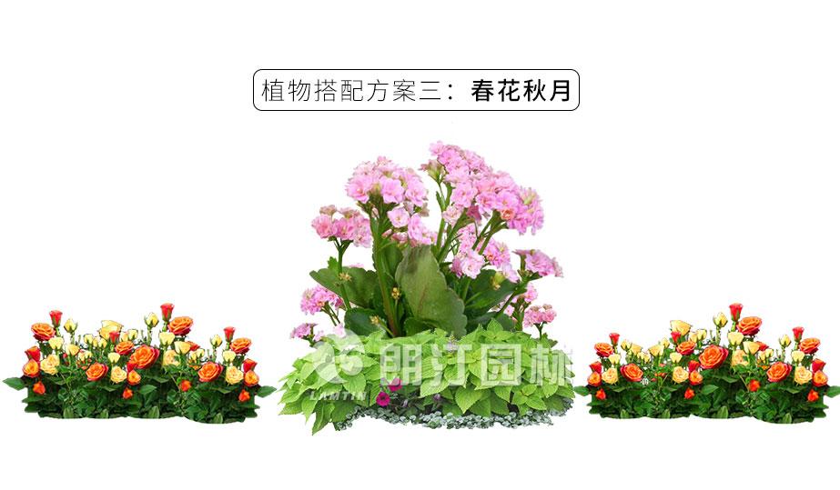 蝴蝶榫快拼花箱植物搭配