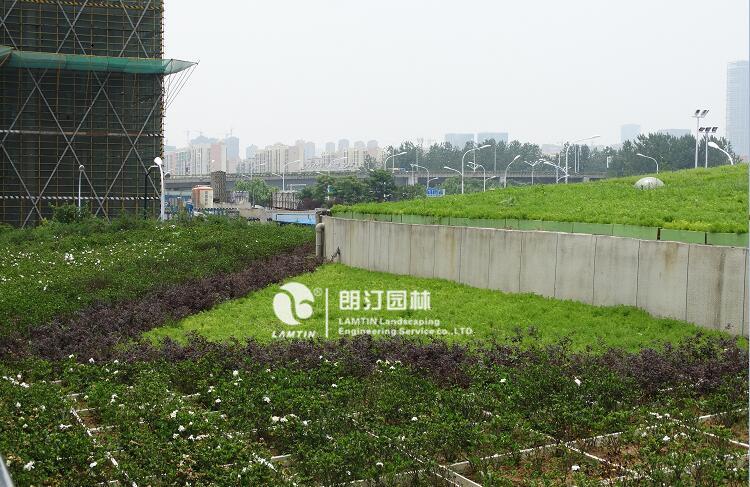 合肥南站屋顶绿化