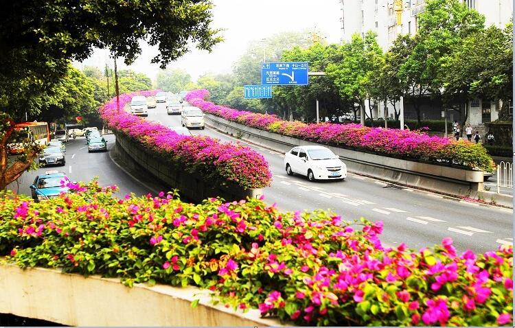 3广东广州高架桥绿化景观案例